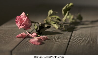 Withered rose flower with crushed dried petals on wooden...