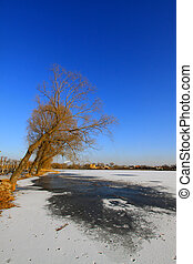 withered tree landscape in the snow, North China