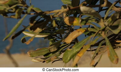 Withering Beach Trees, Qld Island, Australia - Extreme close...