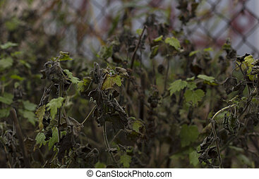 Withering wilting fading fall plants background - A photo of...