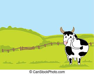 witte , black , koe