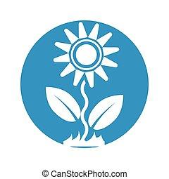 witte bloem, achtergrond, pictogram