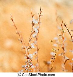 witte bloem, in, de, gras, en, abstract, achtergrond