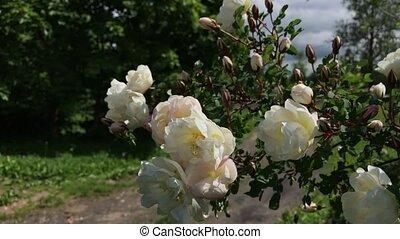 witte bloem, in de wind