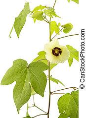 witte bloem, verticaal, katoen