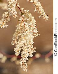 witte bloemen, tak