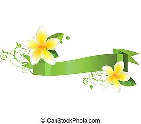 witte bloemen, vrijstaand, achtergrond