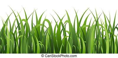 witte , gras, groene, vrijstaand, achtergrond