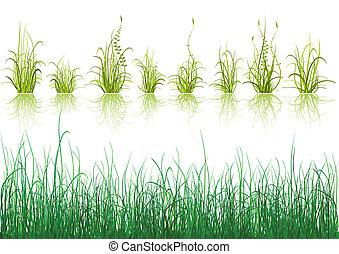 witte , gras, vrijstaand, groene