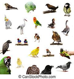 witte , groep, vogels