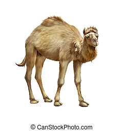 witte , huiselijk, vrijstaand, staand, kameel