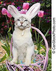 witte kat, geklede, zoals, een, konijntje