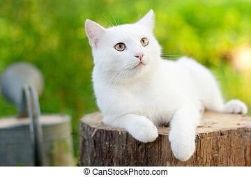 witte kat, in de tuin