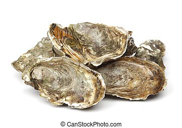 witte , oesters