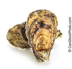 witte , oesters, vrijstaand, achtergrond