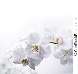 witte , orchidee, op, de, water
