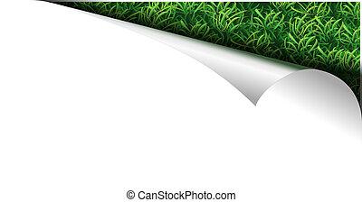 witte , papier, pagina, met, gras, in, krul