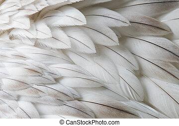 witte , pluizig, veer, closeup