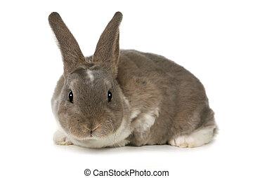 witte , schattige, konijntje, achtergrond