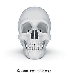 witte , schedel, op, witte , 3d, illustratie