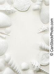 witte , seashell, frame, achtergrond