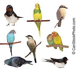 witte , set, vogels, vrijstaand