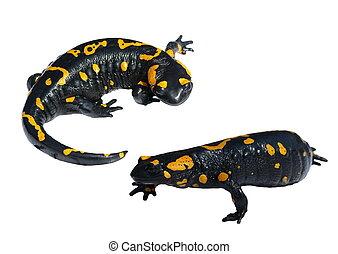 witte , set, vrijstaand, salamander