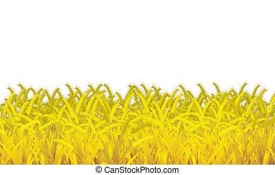 witte , tarwe, achtergrond
