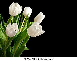witte , tulpen, op, zwarte achtergrond