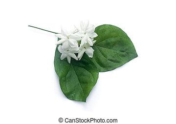 witte , van, jasmijn, flower.