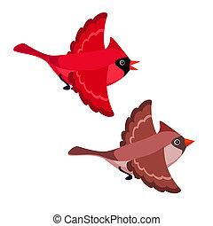 witte , vliegen, achtergrond, vrijstaand, kardinalen