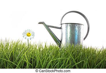 witte , watering, oud, groenteblik, gras