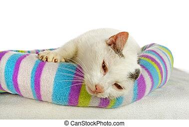 witte , zijn, bed, tomcat, kat