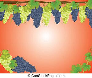 witte , zwarte druiven, achtergrond