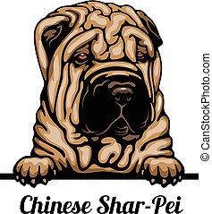 wizerunek, kolor, -, tło, shar-pei, chińczyk, biały, breed...