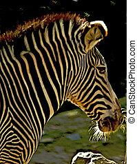 wizerunek, od, na, afrykanin, zebra, z, przedimek określony...