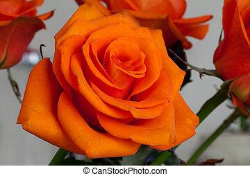 wizerunek, pomarańcza, do góry szczelnie, niezamężna podniosła się