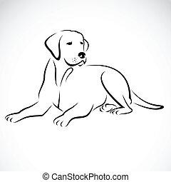 wizerunek, wektor, labrador, pies