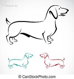 wizerunek, wektor, pies, (dachshund)