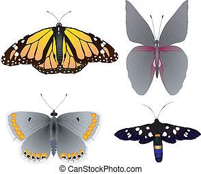 wizerunki, od, piękny, butterflies1