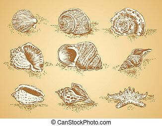 wizerunki, seashell, graficzny, zbiór