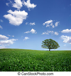wkładany, drzewo, samotny, błękitne niebo, chmury, zieleń biała