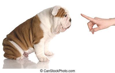 woche, altes , bulldogge, -, hund, hand, personen,...
