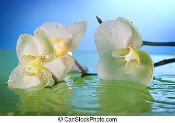 woda, biały, storczyk