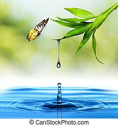 woda kapią, liść