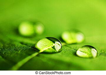 woda krople, na, liść, makro