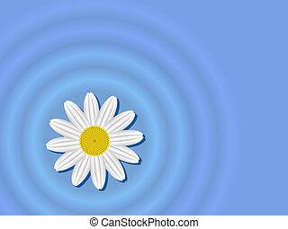 woda, kwiat