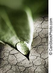 woda, liść, kropla, zielony