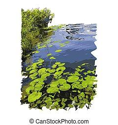 woda, odizolowany, lotos, tło., albo, realistyczny, jezioro, lilie, biały, trzcina, liście