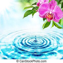woda, -, pojęcie, świeżość, krople